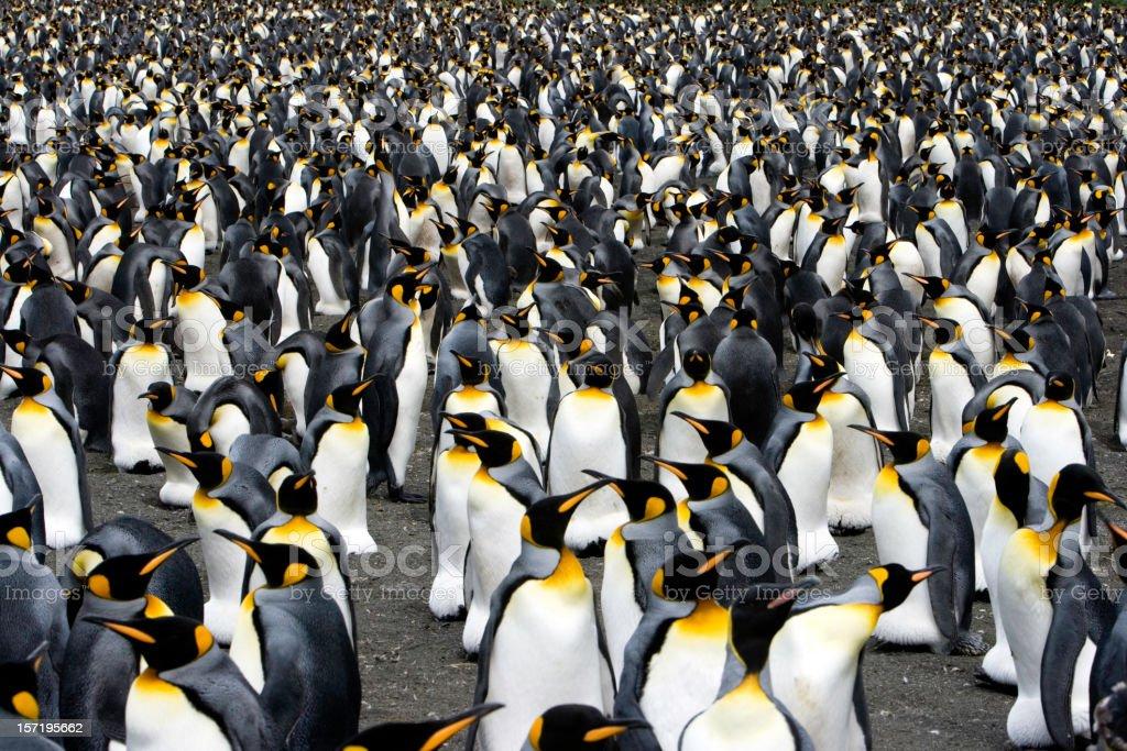 penguins to the horizon IV stock photo
