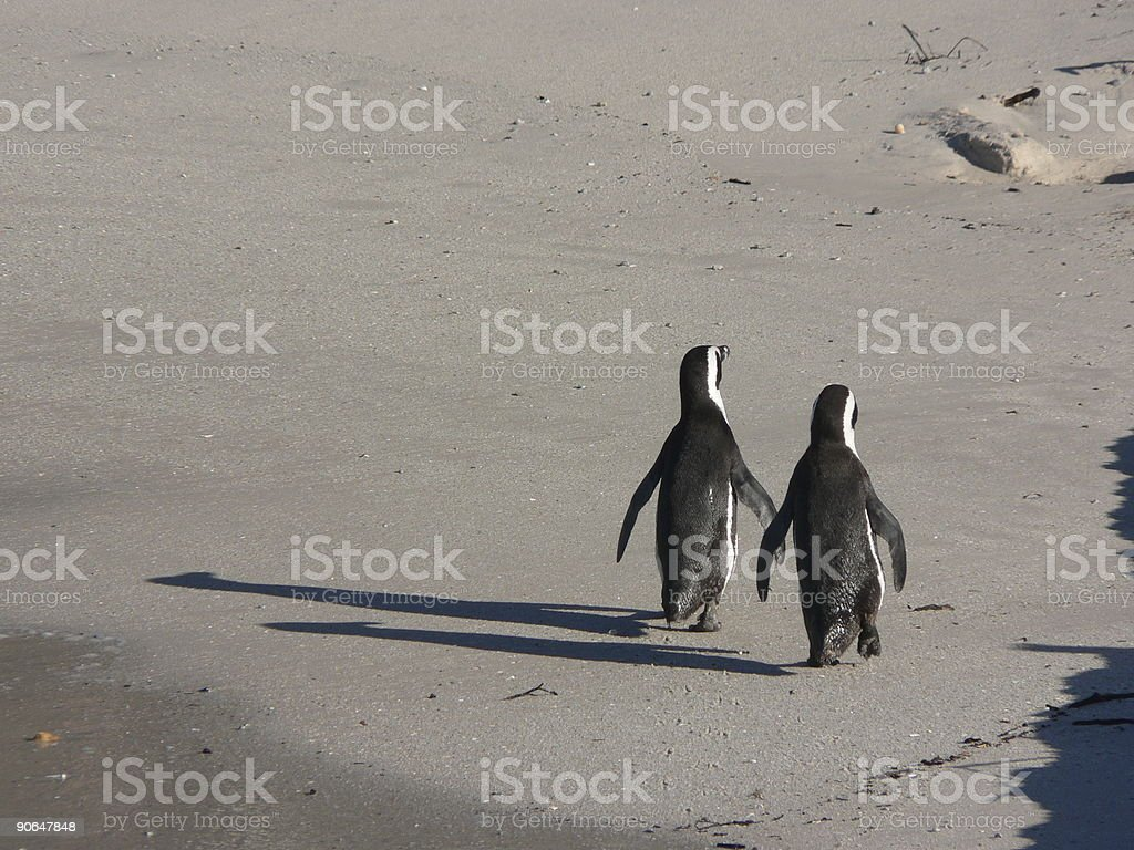 Penguins walking on the beach stock photo