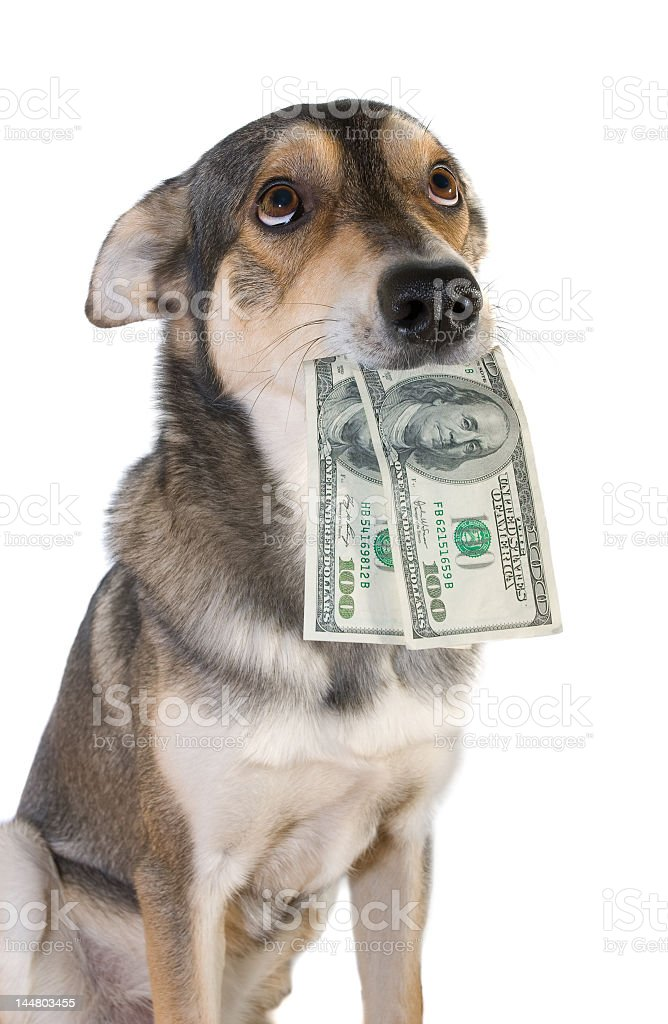 Penitent canine trying to return money to person stock photo
