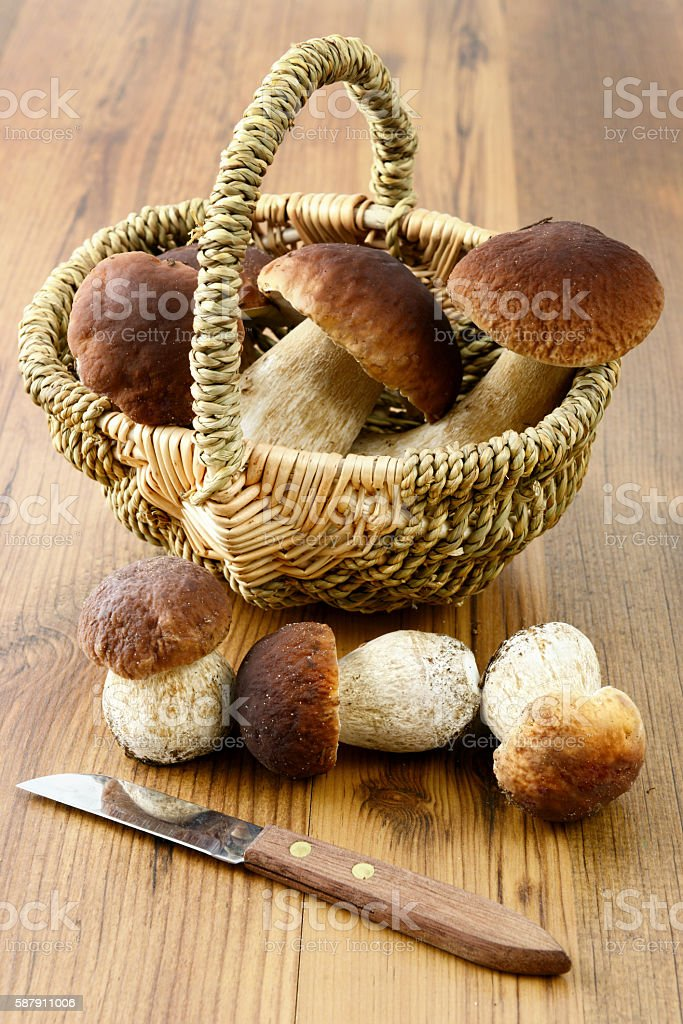 penny bun mushroom on wooden table background stock photo