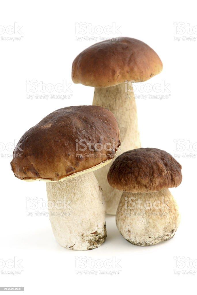 penny bun (boletus edulis) - porcini mushroom stock photo