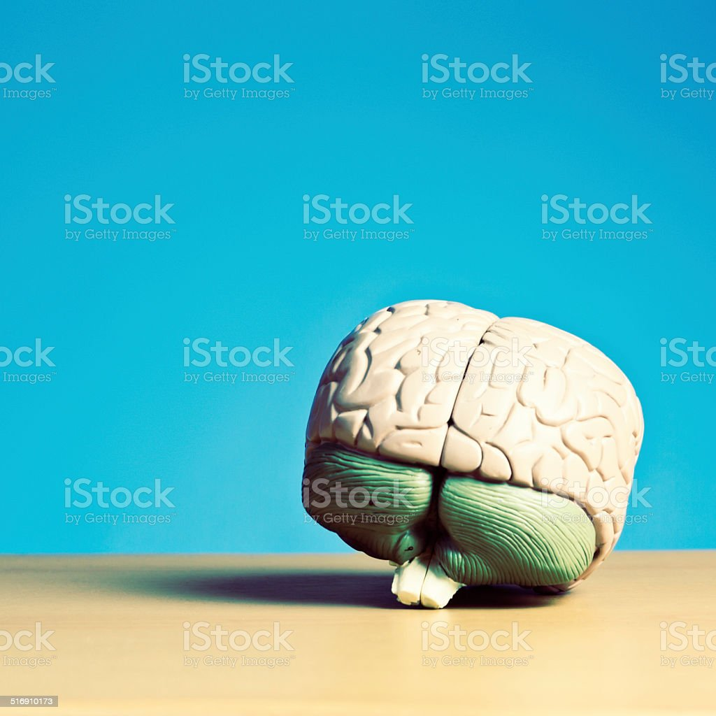 Penny for your thoughts: model brain on blue with copyspace stock photo