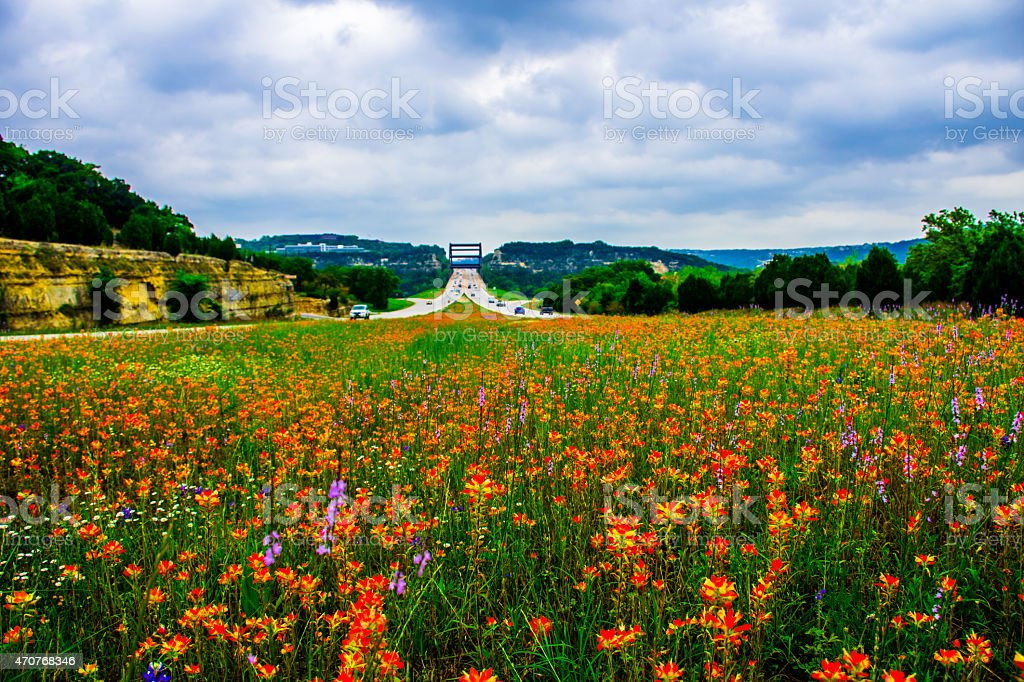 Pennybacker Bridge Middle of Wildflower Field Central Texas stock photo