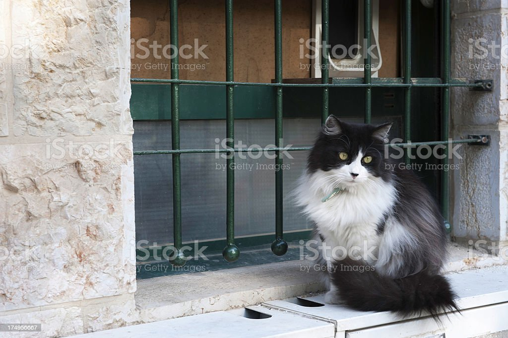 Pensive Cat stock photo