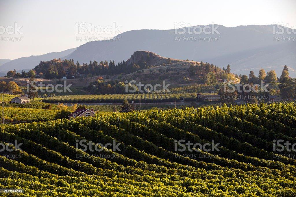 Penticton Naramata Okanagan Valley Vineyard stock photo