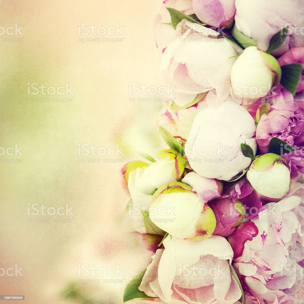 Peony flower background. stock photo