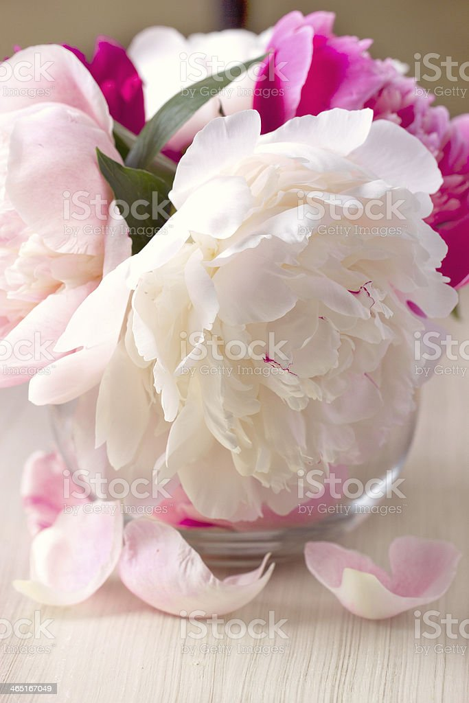 Peony flower in a vase stock photo