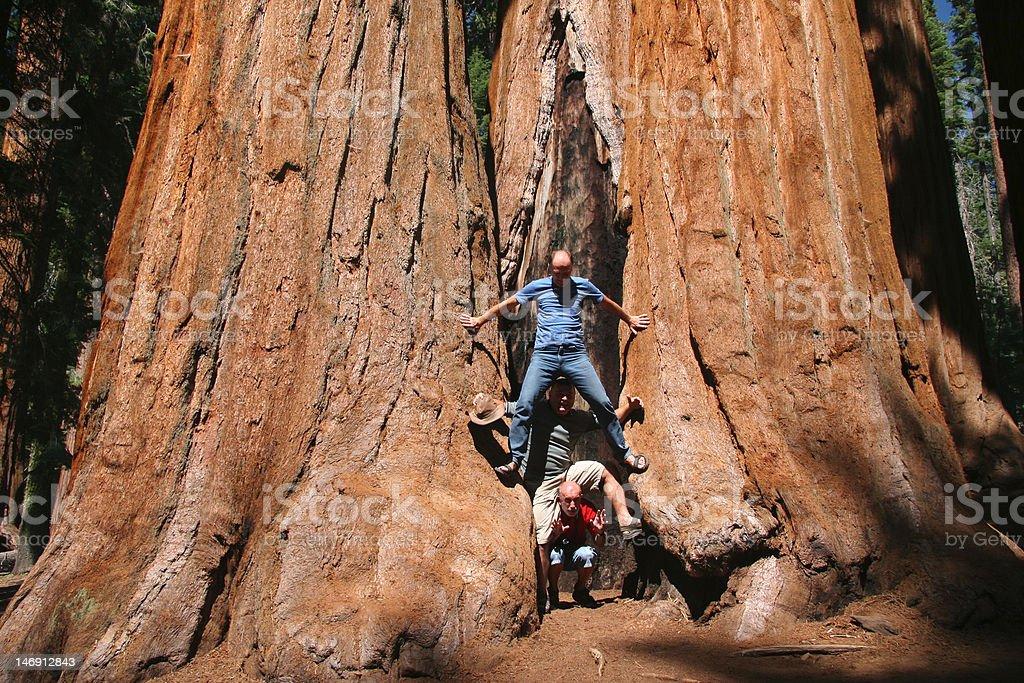 People against Sequoia stock photo