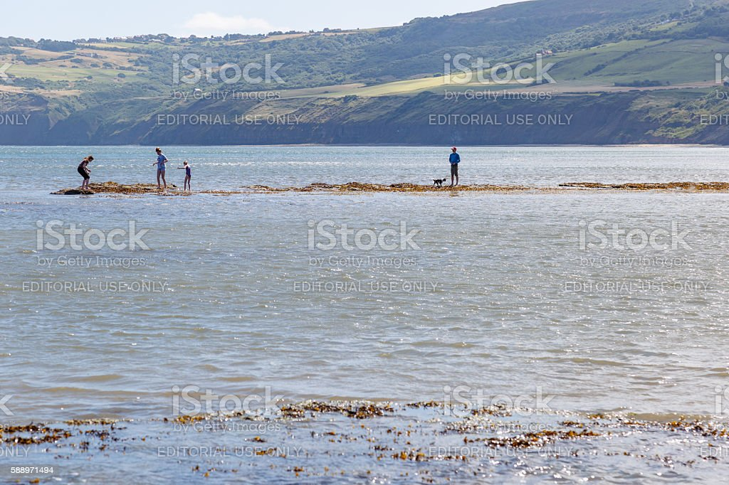 people and dog on sandbank, in the sea stock photo