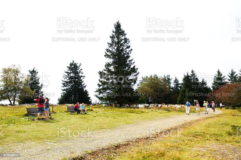 People and sheeps on heathland of Kahler Asten stock photo