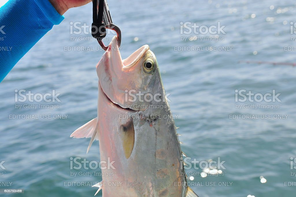 People are fishing queenfish stock photo