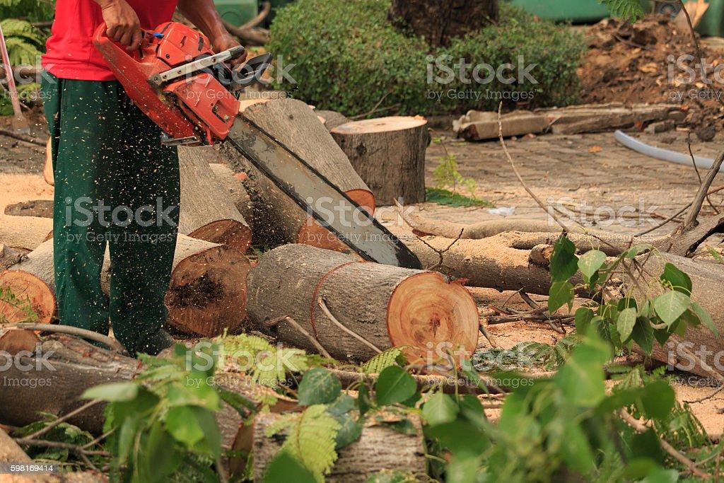 People cutting  trees. stock photo
