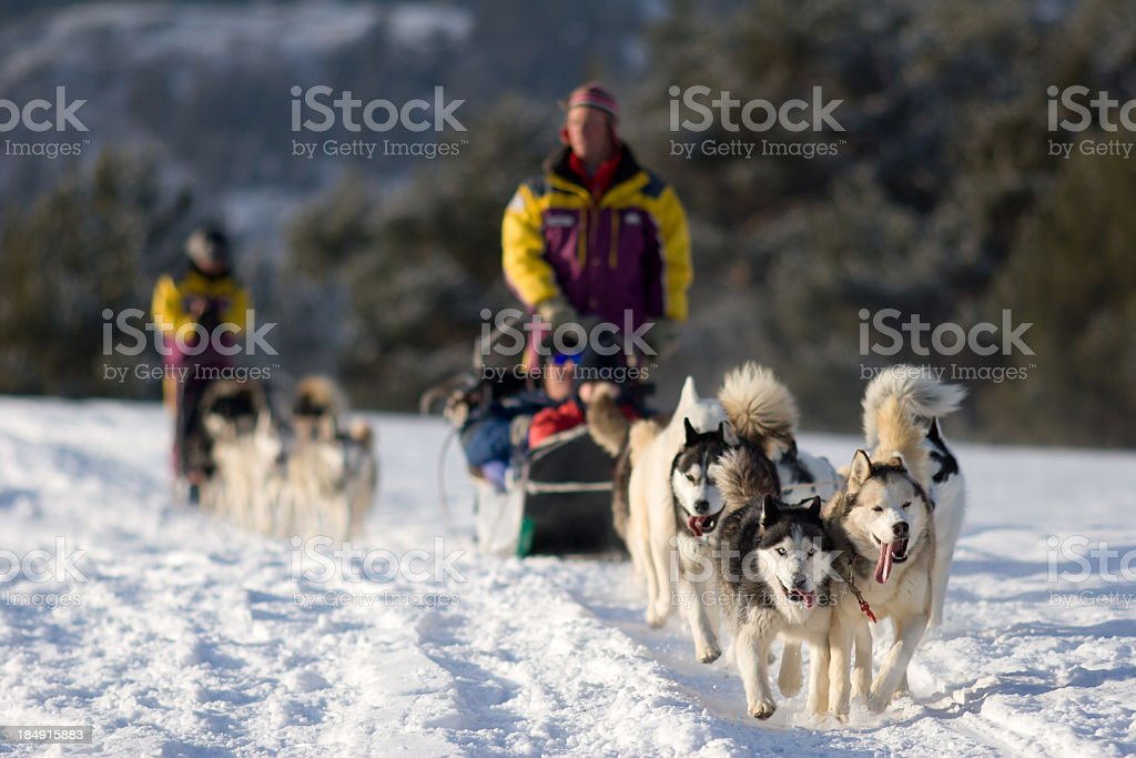 People Dog Sledding in Winter Near Mountains stock photo