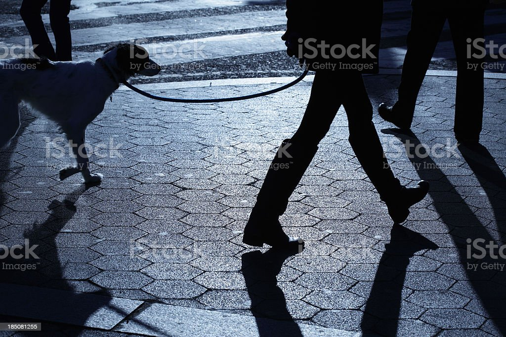 People dog walking in blue night shadows stock photo