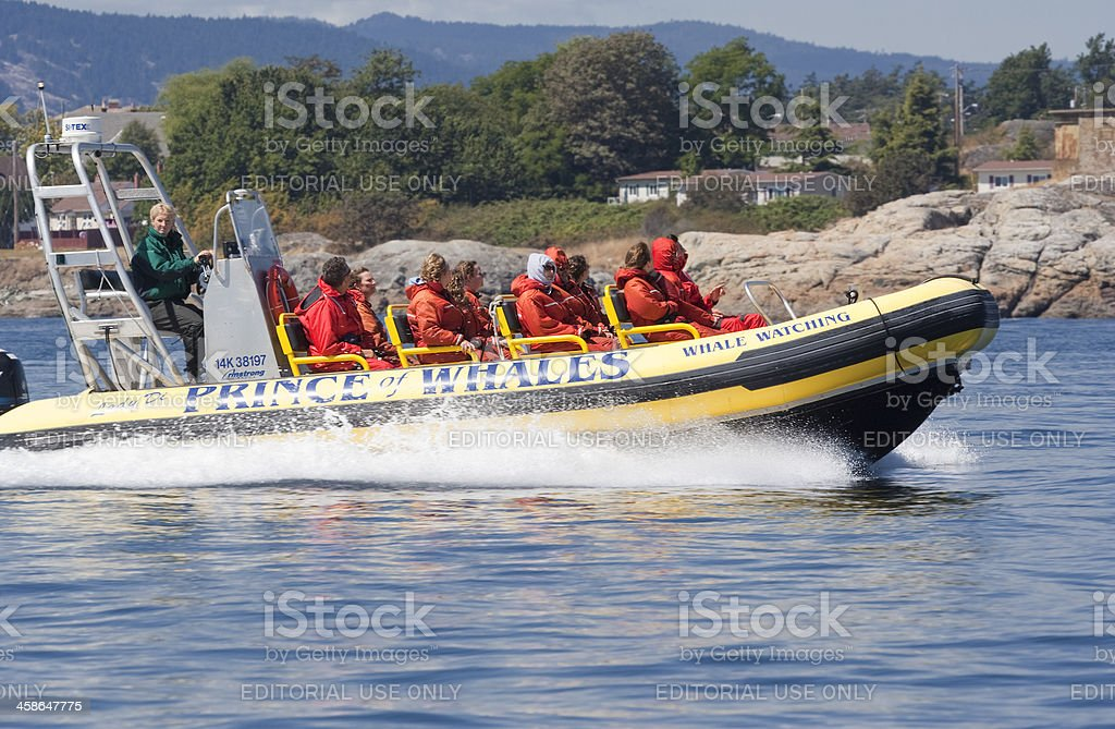 People enjoying Ride with Whale Watching Zodiac royalty-free stock photo