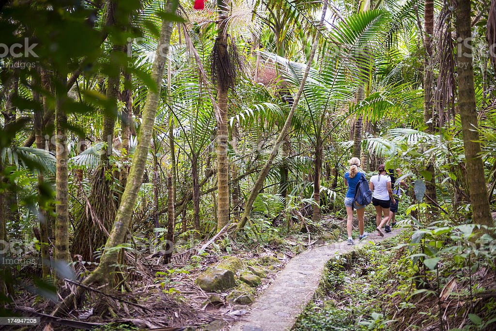 People hiking at El Yunque National Forest in Puerto Rico stock photo