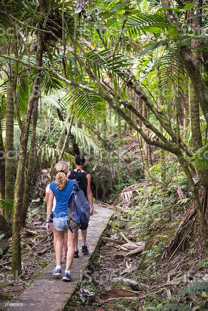 People hiking in rainforest stock photo