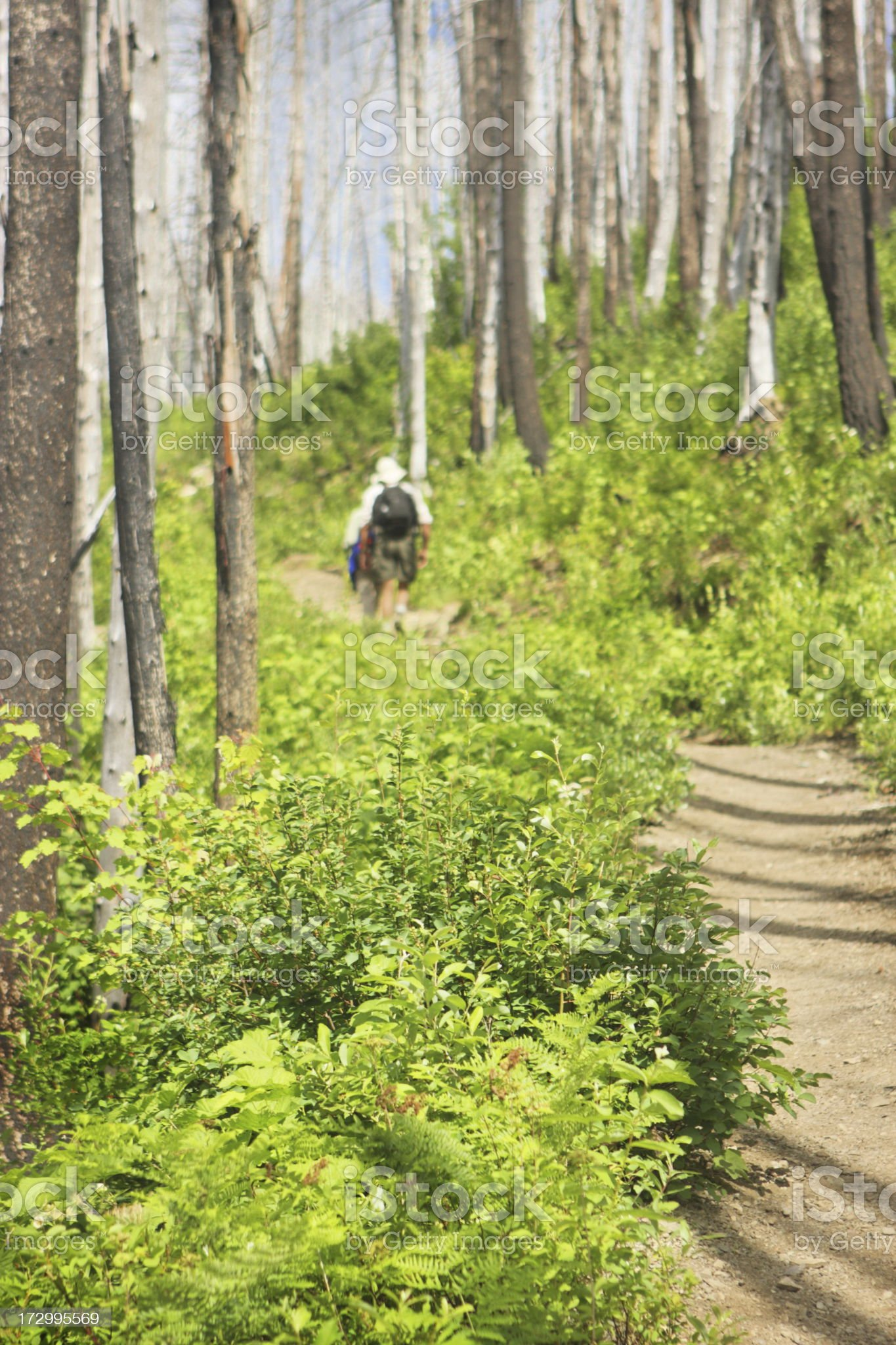 People Hiking Wilderness Trail royalty-free stock photo