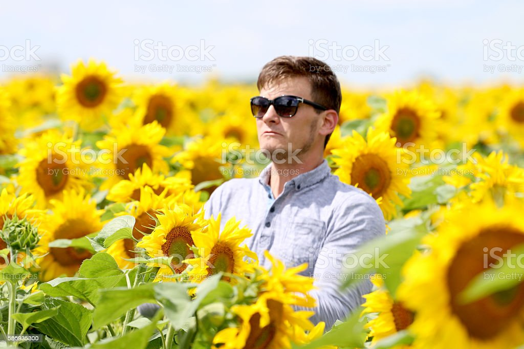 people in the field of sunflowers, stock photo