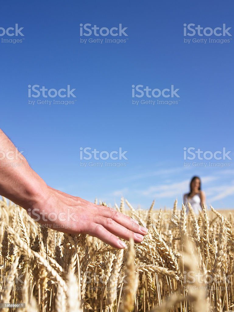 People in Wheat Field royalty-free stock photo