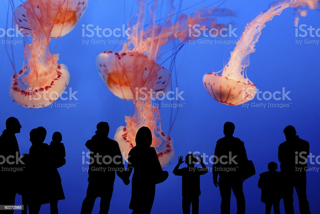 People observing jellyfish in the aquarium stock photo