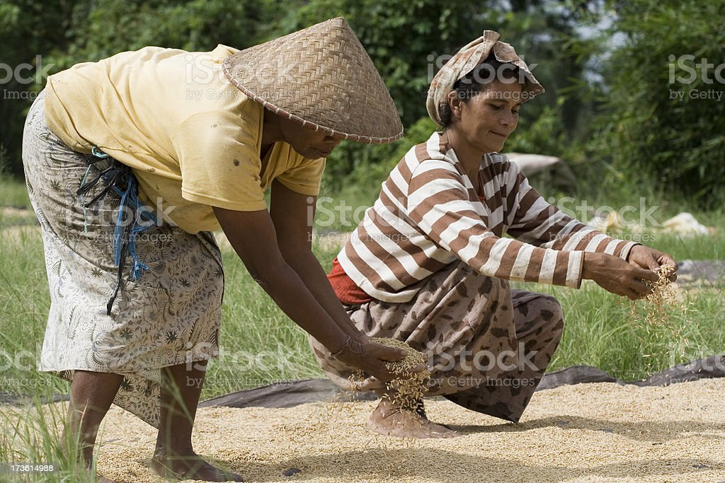 People of Bali royalty-free stock photo