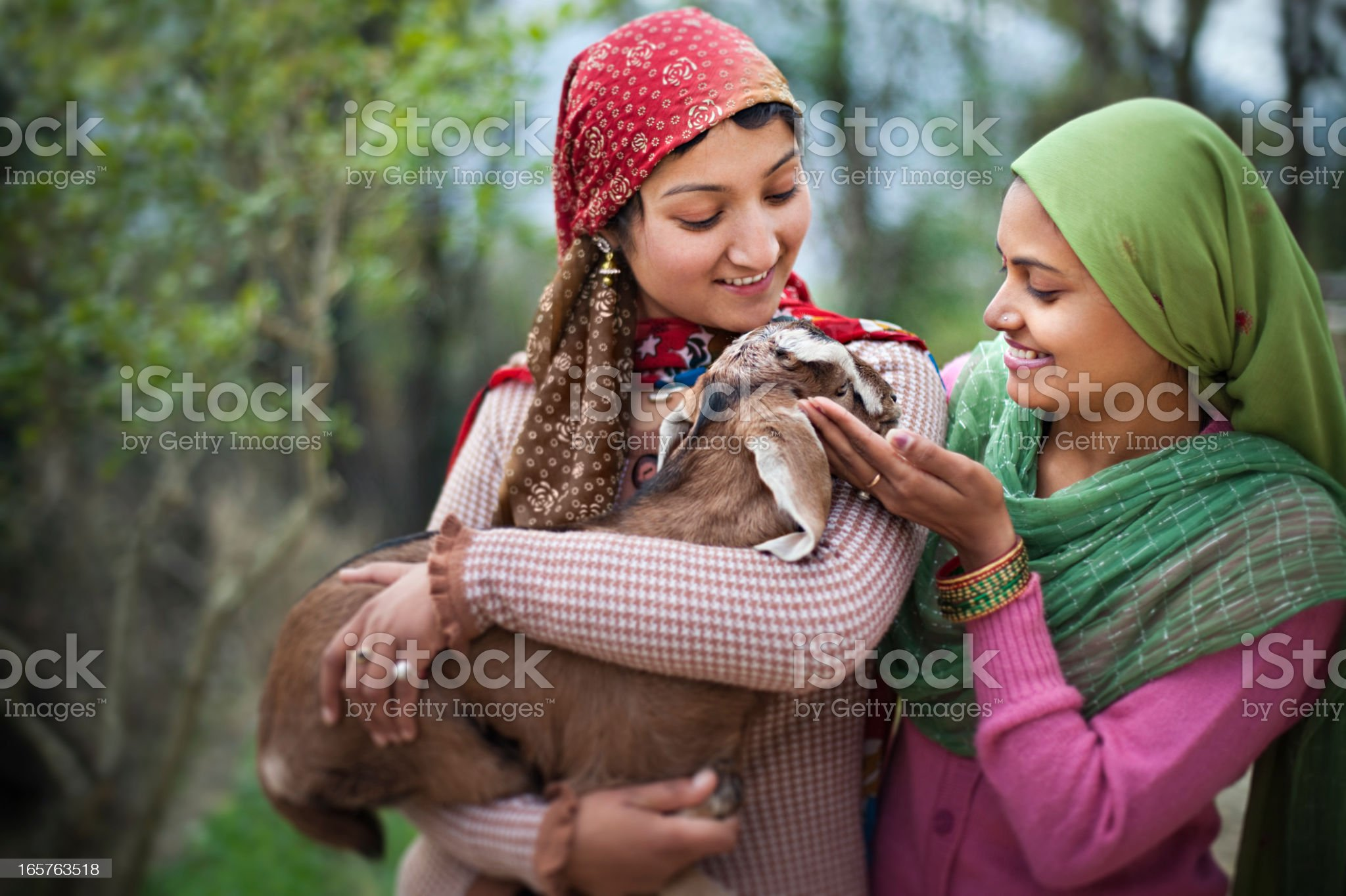 People of Himachal Pradesh: Beautiful young women with goat kid royalty-free stock photo