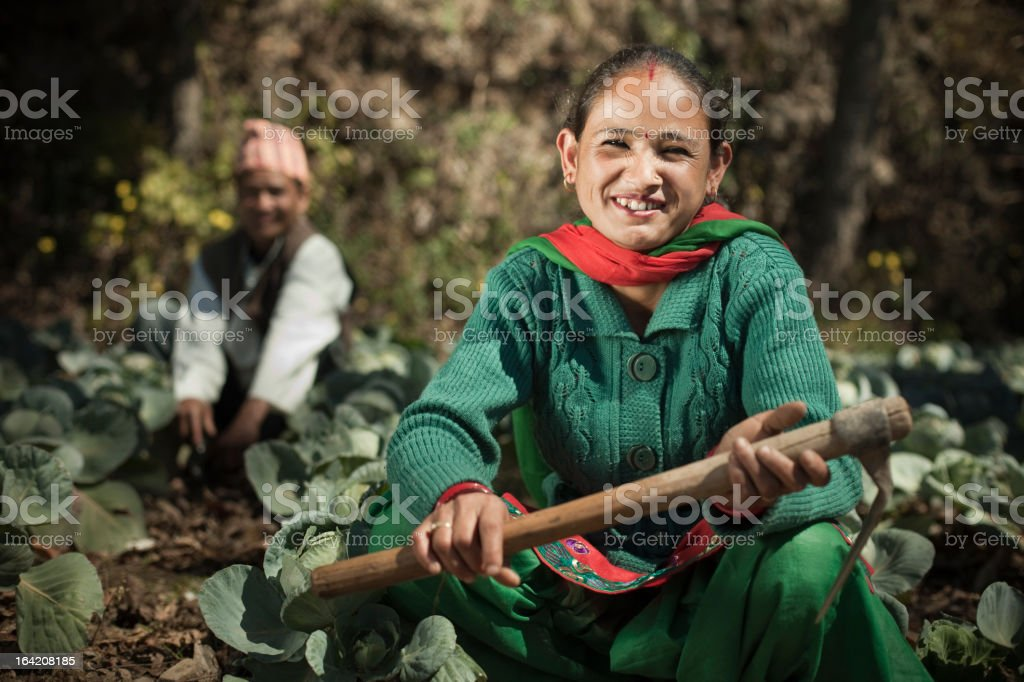 People of Nepal: Happy farmers in cabbage farm. royalty-free stock photo