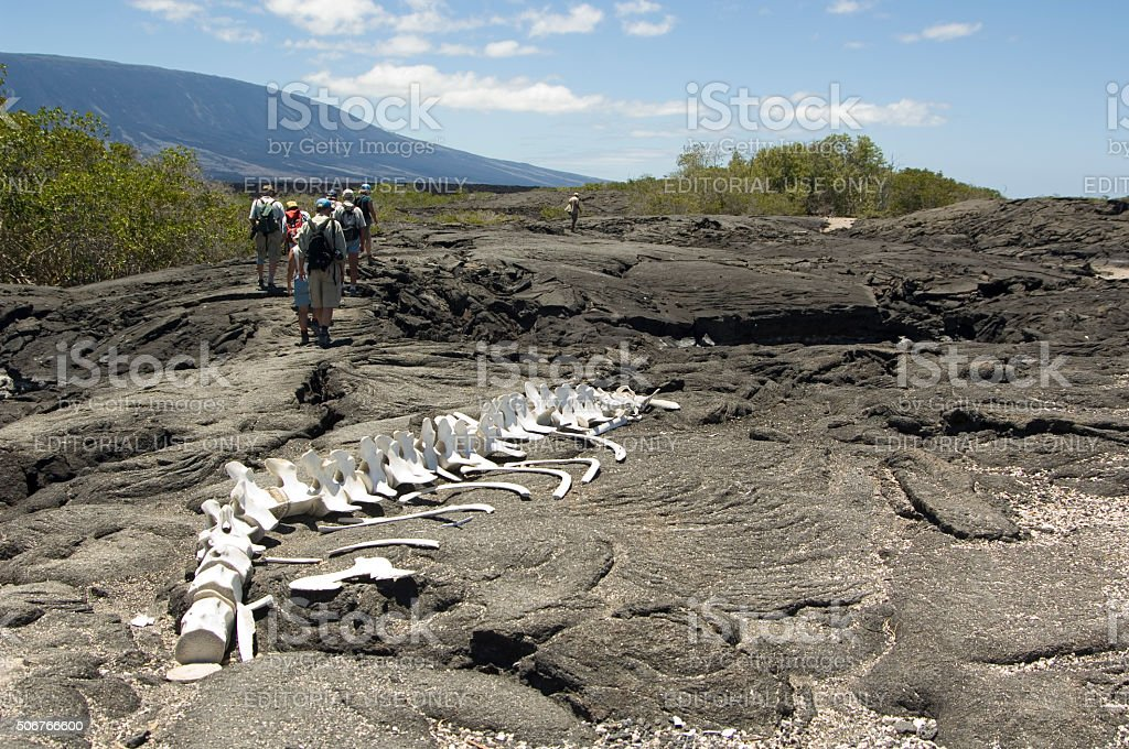 People on Lava Field with whale skeleton, Galapagos Islands stock photo