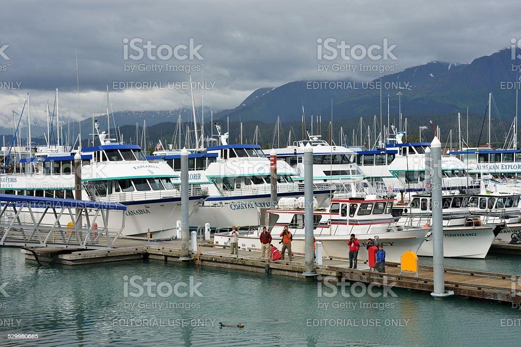 People Photographing Sea Animal at Seward Port stock photo