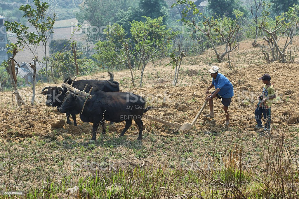 People plowing the dry lands in Bandipur stock photo