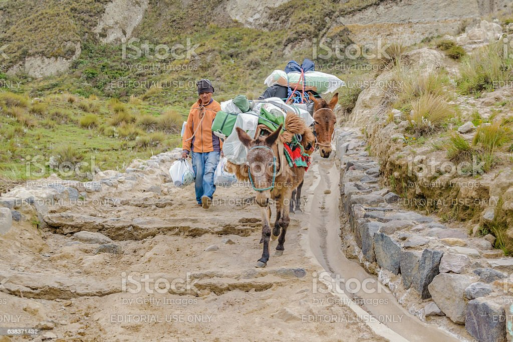 People Riding Mules at Road in Quilotoa Lake, Ecuador stock photo