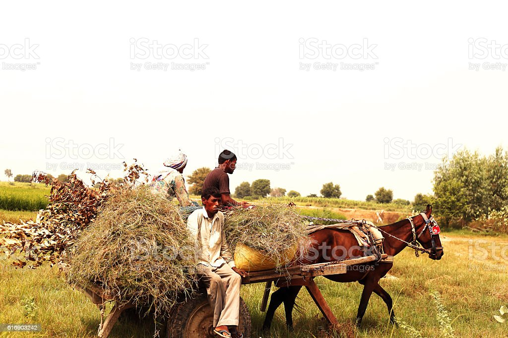 People travelling by horse drawn in the field stock photo