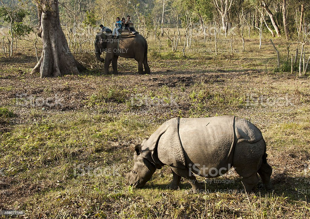 People viewing one-horned rhino stock photo