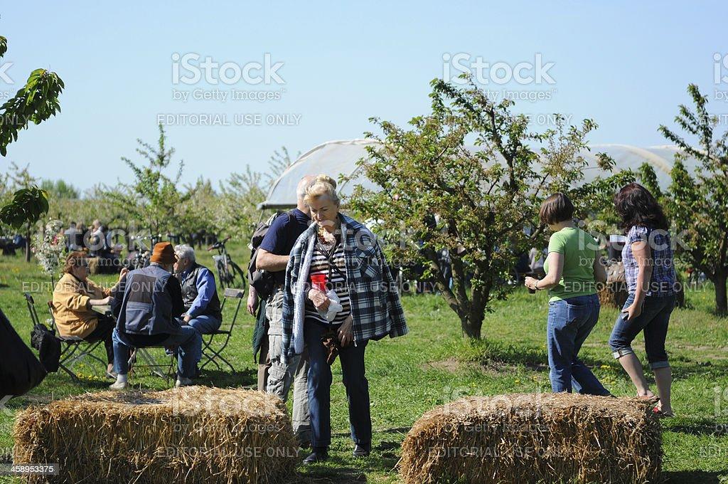 People visiting cherry tree blooming celebration in Werder (Brandenburg, Germany) stock photo
