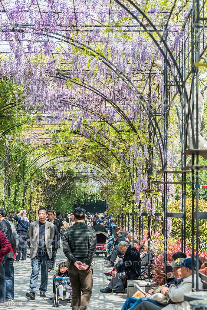 people walking and relaxing in wisteria lane fuxing park shanghai royalty-free stock photo
