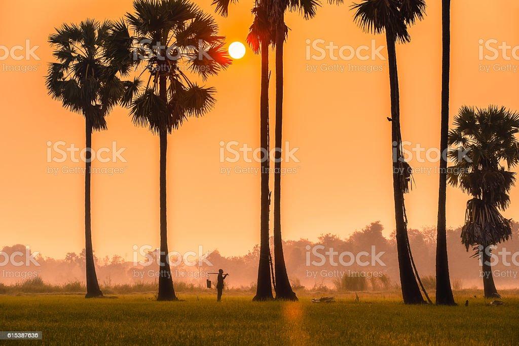 People with career climbing palm sugar to keep fresh stock photo