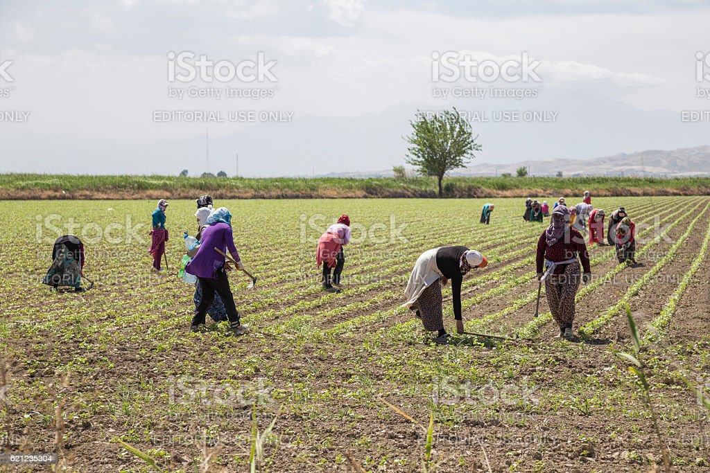 People working on a field in Anataolia, Turkey. stock photo