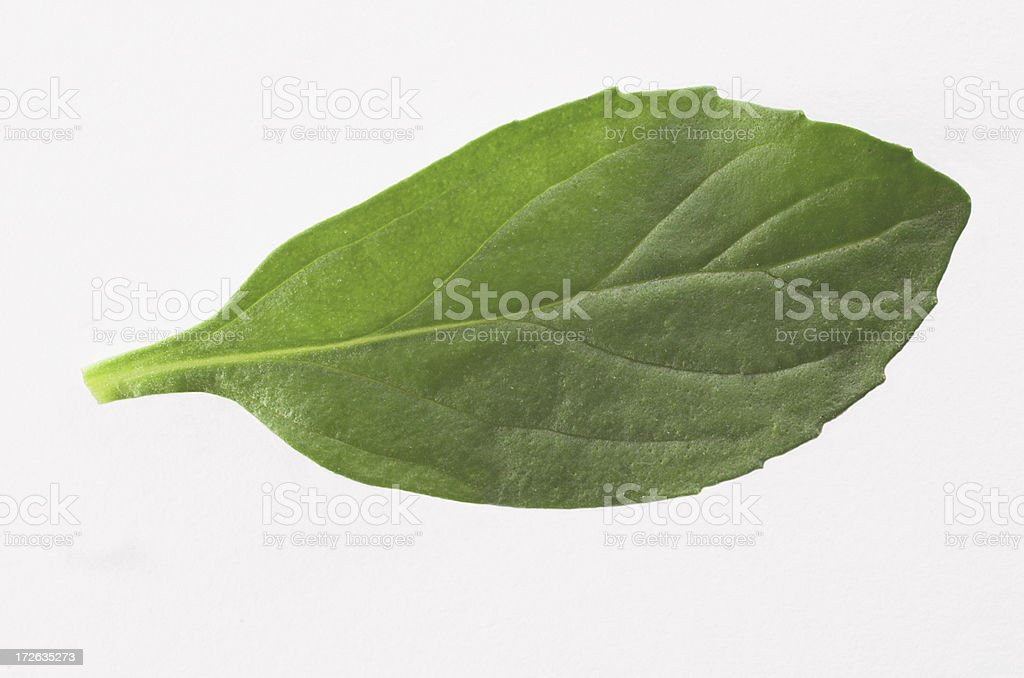 pepermint leaf request royalty-free stock photo