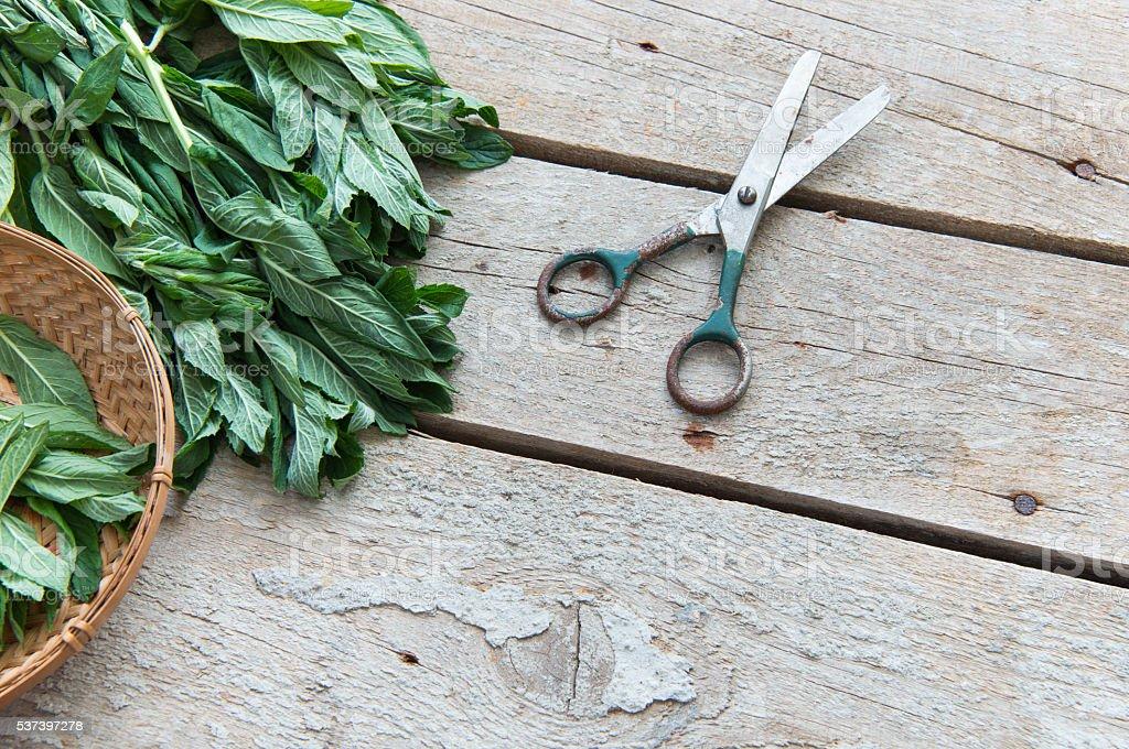 Pepper mint stock photo