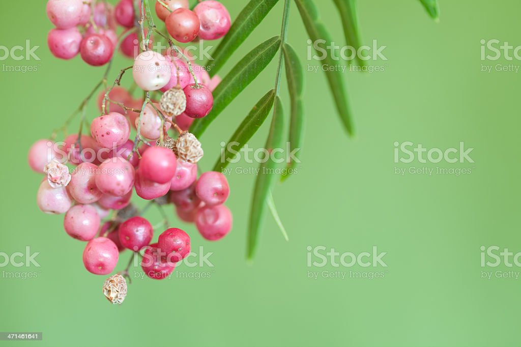 Pepper Tree Berries stock photo