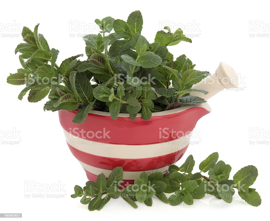 Peppermint Herb royalty-free stock photo