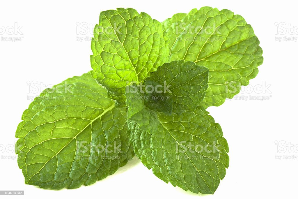 Peppermint isolated royalty-free stock photo
