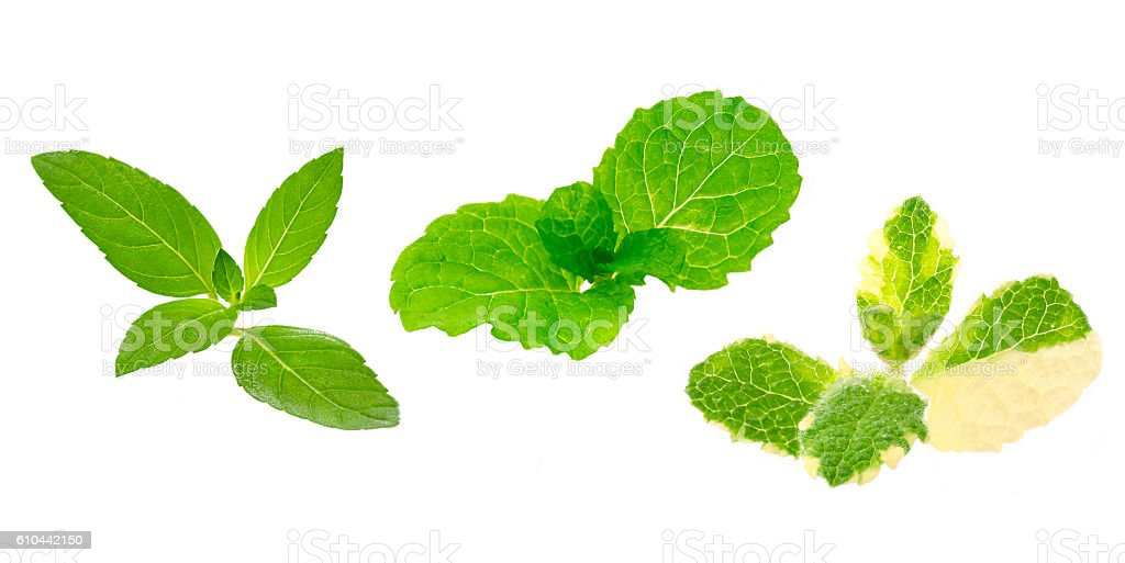 peppermint, spearmint and pineapple mint on a white background stock photo
