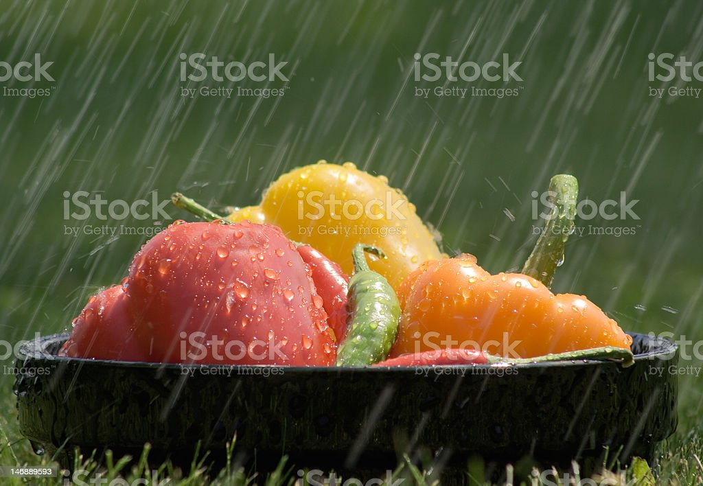 Peppers caught in the rain stock photo