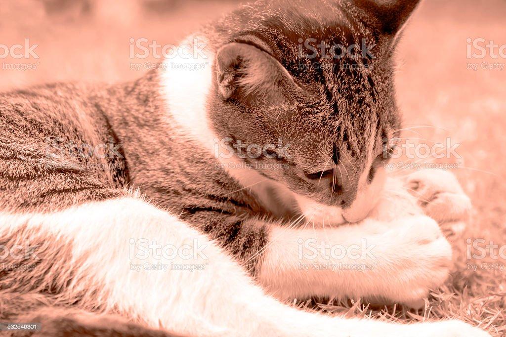 Peppy Cat stock photo