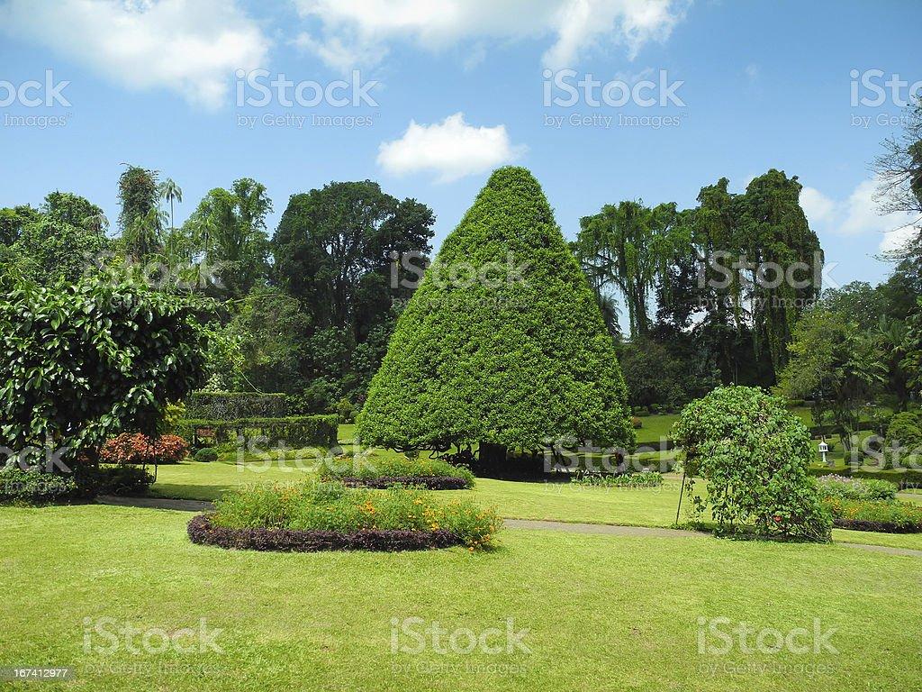 Peradeniya Botanical Garden landscape royalty-free stock photo