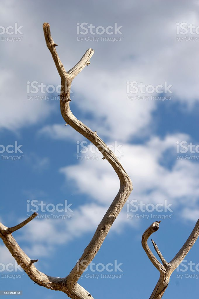 perch against blue sky royalty-free stock photo