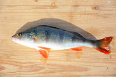 Perch fish on the wooden background- winter fishing, hobby