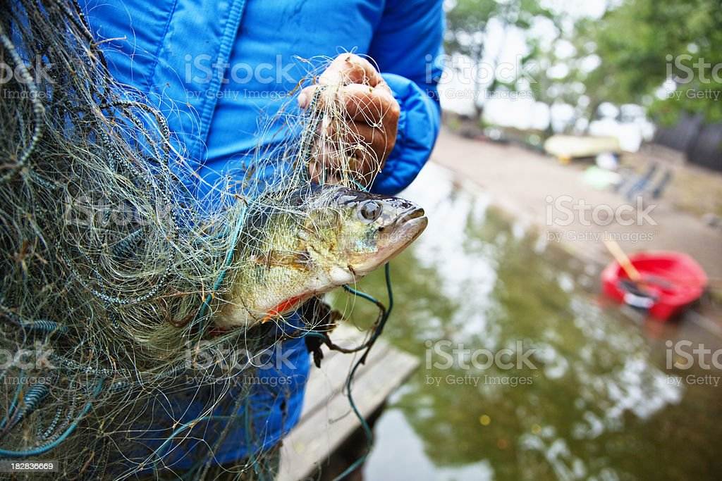 perch in net royalty-free stock photo